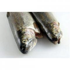 Boneless Rainbow Trout