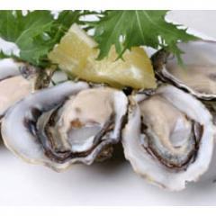 Long Island Bluepoint Oysters