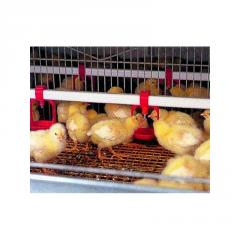Poultry Watering Systems