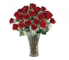 Always Roses - 1 Dozen