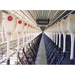 Electronic Sow Feeding Systems