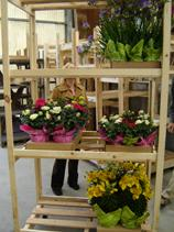 Point-Of-Sale Plant, Bulb and Nursery Racks