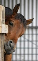 SmartLic FlaxLic® Horse Supplements