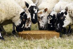SmartLic AP-25* Sheep Supplement