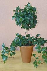 Classic Ivy Topiary with Ball and Stem