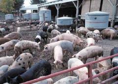 Animal Waste Lagoon Treat Bio-Green Hydrocarbon