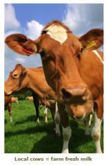 Little Rhody Farms Milk