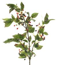 Cherry Branch | BOX OF 6