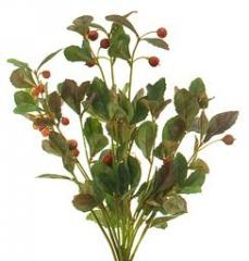 Partridge Berry Bunch   BOX OF 6