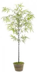Bamboo Tree, Blackstone Terracotta