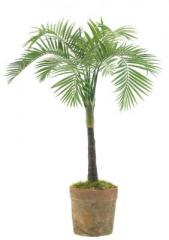 Coconut Palm, Terracotta Pot