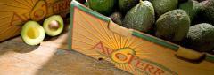 Avocados from California