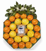 Florida Citrus Wreath