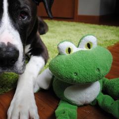 Unleash the Fun™ Bungee Beasts™ Frog