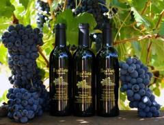 Boa Vista Wines