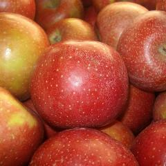 Apples from Shaw Orchards