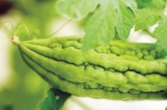 Chinese Vegetables - Bitter Melon