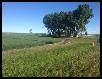 Milk River Farm