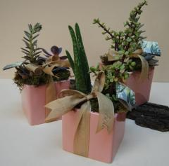Modern Succulent Pottery Cube