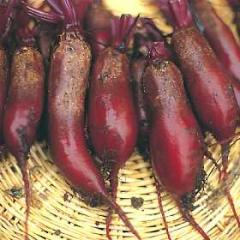 Beets Cylindra Long Red 1,000 seeds
