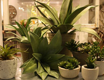Arty_carousel8 (plant)