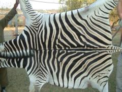 A Grade Zebra Hide