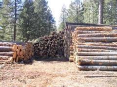 Timber 4x1,2x2,3x2,5x2 4.8 meter lengths job lot