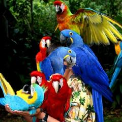 African Grey / Macaw /Cockatoo Parrots and Fertile