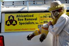 Killer bee live removal Indian Wells CA,bee