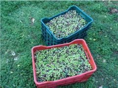 Greek Olive Oil from Crete - 1000 ml (33.8fl.oz.)