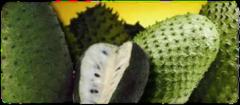 Frutas exoticas Premium