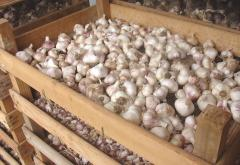 Fresh and Dried Garlic, Onions