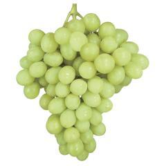 Autumn King Grapes