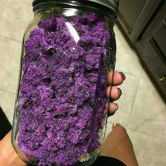 Las Vegas Purple Kush