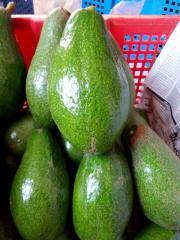 Fresh Avocado / Hass Avocado, Fuerte Avocado