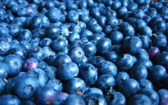 Frozen Bilberries