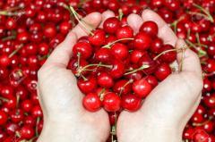 Fresh Cherries Fruits