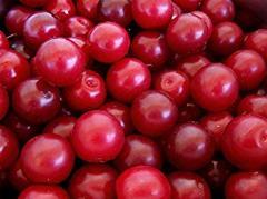 Frozen Cherry-plum