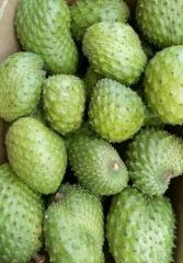 FRESH SOURSOP FRUIT/ GRAVIOLA FRUIT