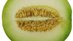 Melons seed