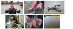The technology of growing tropical Australian crayfish in the south of Ukraine PP034