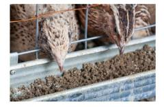 Feed for poultry farming