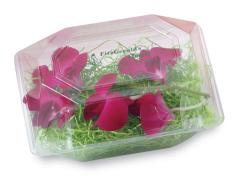 Clear Flower Boxes