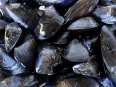 Prince Edward/Fully Cooked Mussels