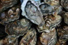 Oysters 25# Box