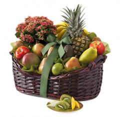 fruit and flower gift basket bloods hammock groves  pany in delray beach   online store      rh   46495 us all biz