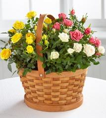 The FTD® Rose Garden Basket by Better Homes and