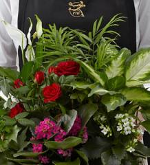 FTD Florist Designed Blooming and Green Plants in