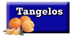 Tangelos