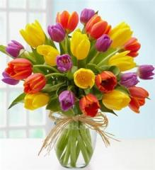 Cut Tulips Without Filler